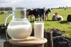 NFU Letter to Secretary Vilsack Urges USDA to Provide Immediate Support for Dairy Farmers